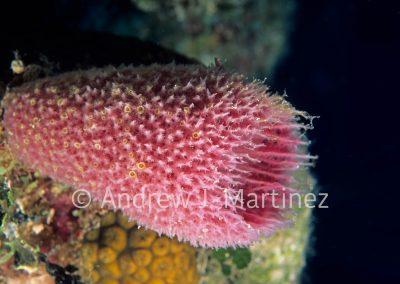 Pink Sea Vase