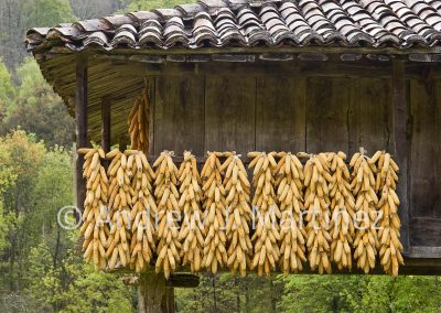 Drying corn on horreo