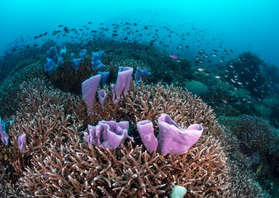 Philippine reef scene
