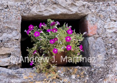 Flowers in wall