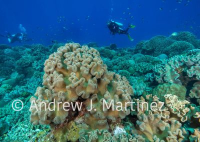 Leather coral scene