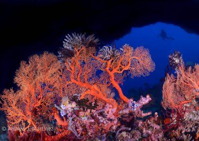 Gorgonians near underwater arch